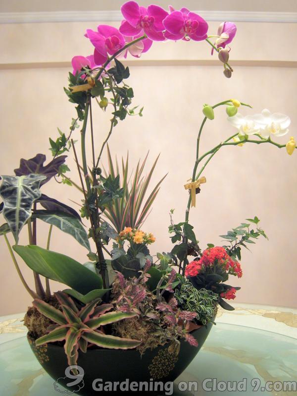 Indoor Garden Gallery of Tabletop Container Garden Bento Box